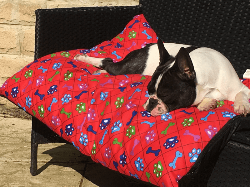 French bulldog, Paddy, asleep on a cushion.