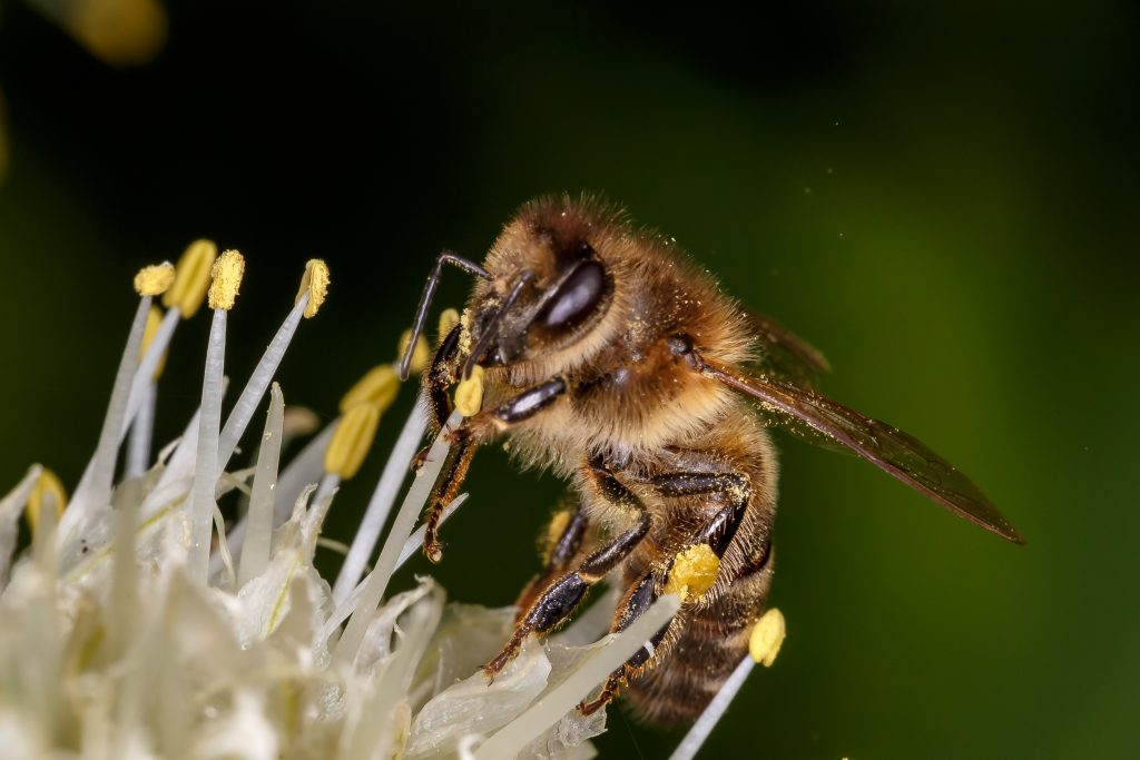 Honey bee image to support the text on metaphor